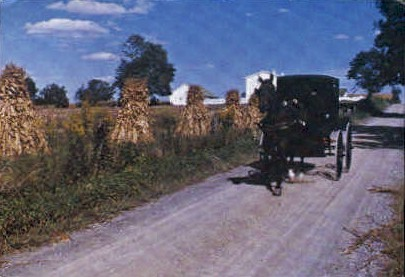 Buggy and Corn - Misc, Ohio OH Postcard