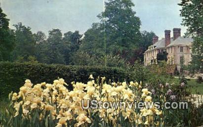 Irises, Kingwood Center - Mansfield, Ohio OH Postcard
