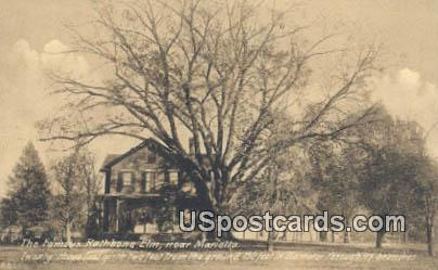 Famous Rathbone Elm - Marietta, Ohio OH Postcard
