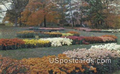 Chrysanthemums, Kingwood Center - Mansfield, Ohio OH Postcard
