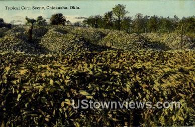 Corn - Chickasha, Oklahoma OK Postcard