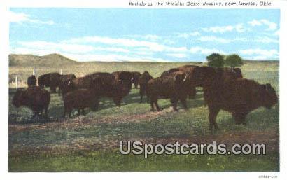 Buffalo, Wichita Game Reserve - Lawton, Oklahoma OK Postcard