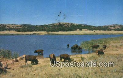 Buffalo, Quanah Parker Lake - Medicine Park, Oklahoma OK Postcard