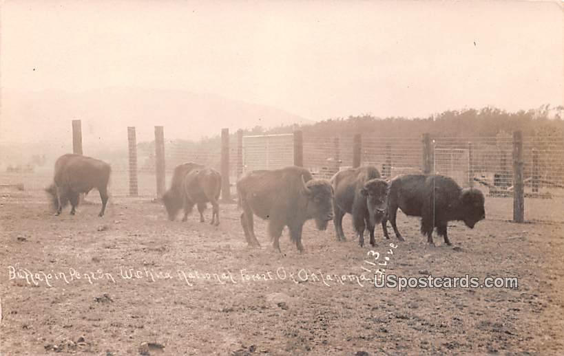 Buffalo in Pen - Wichita National Forest, Oklahoma OK Postcard