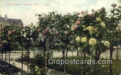 Rose Garden - Portland, Oregon OR Postcard