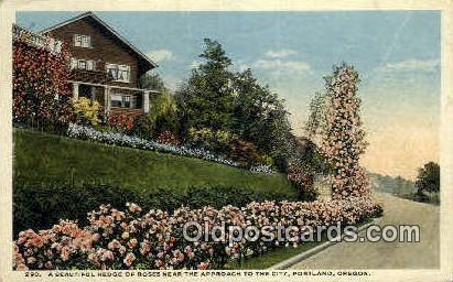 Hedge of Roses - Portland, Oregon OR Postcard