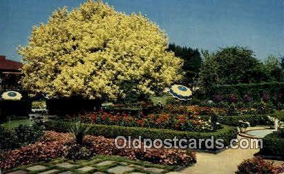 Spanish Garden & Ghost Tree - Portland, Oregon OR Postcard