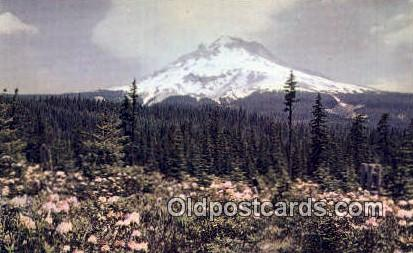 Rhododendrons - Mt Hood, Oregon OR Postcard