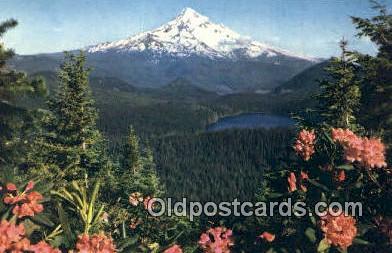 Lost Lake - Mt Hood, Oregon OR Postcard