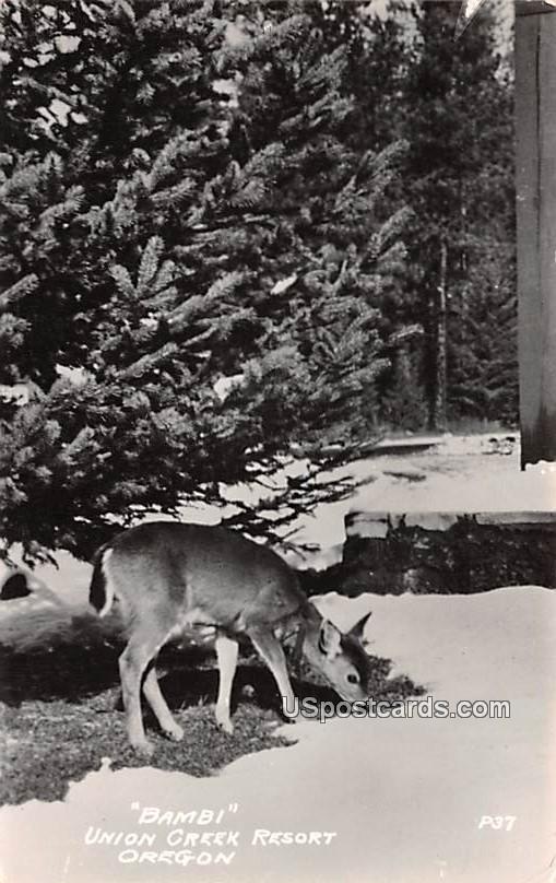 Bambi - Prospect, Oregon OR Postcard