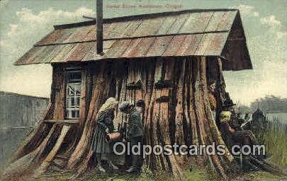 Cedar Stump - Misc, Oregon OR Postcard