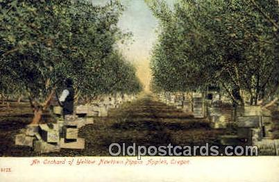 Yellow Newtown Pippin Apples - Misc, Oregon OR Postcard
