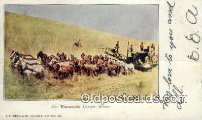 Harvesting Wheat - Misc, Oregon OR Postcard