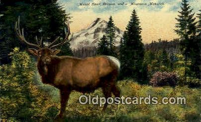 Mountain Monarch - Mt Hood, Oregon OR Postcard
