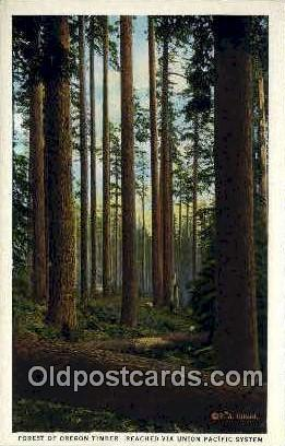 Forest of Oregon Timber - Columbia River Postcard