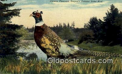 Chinese Pheasant - Misc, Oregon OR Postcard