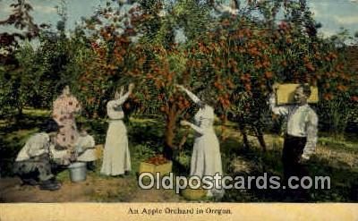 Apple Orchard - Misc, Oregon OR Postcard
