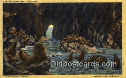 Sea Lion Caves - Oregon Coast Highway Postcards, Oregon OR Postcard