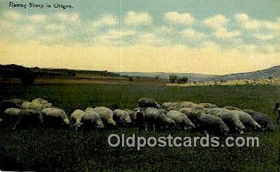 Raising Sheep - Misc, Oregon OR Postcard