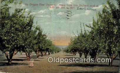 Pregon Pear Orchard - Misc, Oregon OR Postcard