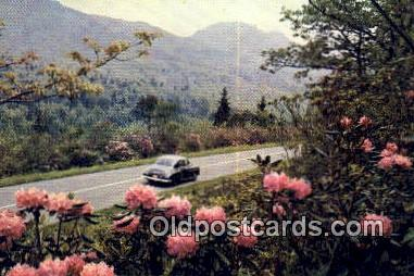 Rhododendrons - Misc, Oregon OR Postcard