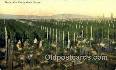 Hop Picking Scene - Misc, Oregon OR Postcard