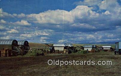 Green Pea Harvest - Misc, Oregon OR Postcard