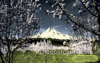 Hood River Valley - Mt Hood, Oregon OR Postcard