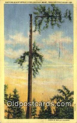 Giant Spruce - Misc, Oregon OR Postcard