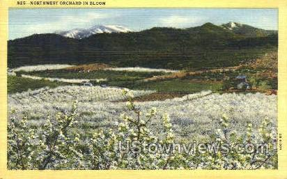 Northwest Orchard in Bloom - Misc, Oregon OR Postcard