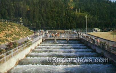 Bonneville Dam, Fish Ladders - Columbia River, Oregon OR Postcard