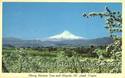 Cherry Blossom Time - Mt Hood, Oregon OR Postcard