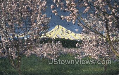 Mt Hood at Apple Blossom time - Oregon OR Postcard