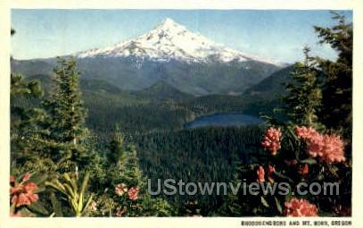 Rhododendrons & Mt Hood - Oregon OR Postcard