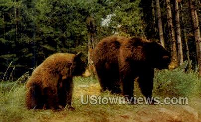Brown Bear - Misc, Oregon OR Postcard