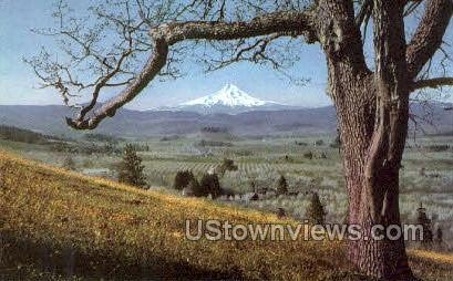 Mt Hood, OR, Oregon Postcard