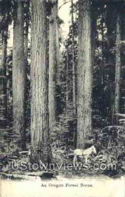 Forest Scene - Misc, Oregon OR Postcard