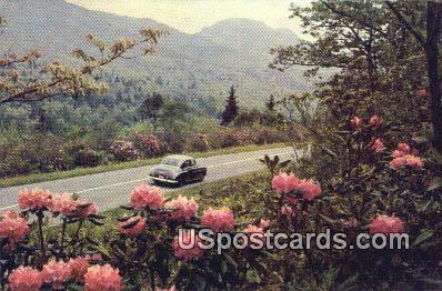 Rhododendron - Misc, Oregon OR Postcard
