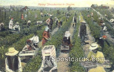 Picking Strawberries - Misc, Oregon OR Postcard