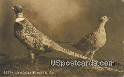Pheasants - Misc, Oregon OR Postcard