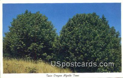 Twin Oregon Myrtle Trees - Misc Postcard