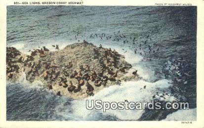 Sea Lions - Oregon Coast Highway Postcards, Oregon OR Postcard