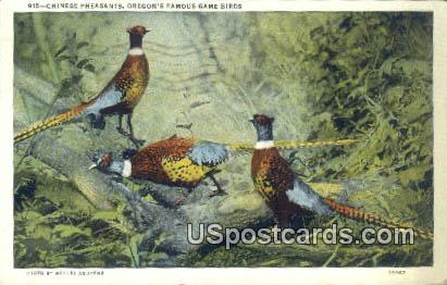 Chinese Pheasants - Misc, Oregon OR Postcard