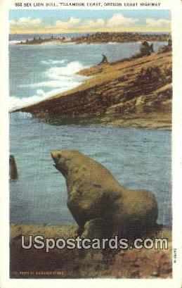 Sea Lion Bull - Oregon Coast Highway Postcards, Oregon OR Postcard