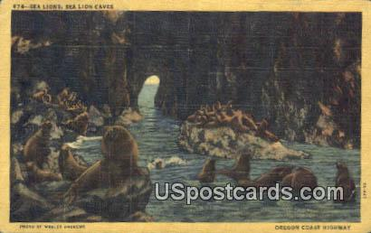 Sea Lions, Sea Lion Cave - Oregon Coast Highway Postcards, Oregon OR Postcard
