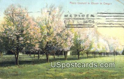 Prune Orchard - Misc, Oregon OR Postcard