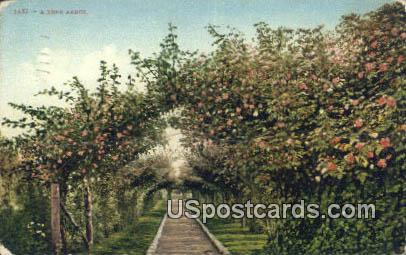 Rose Arbor - Misc, Oregon OR Postcard
