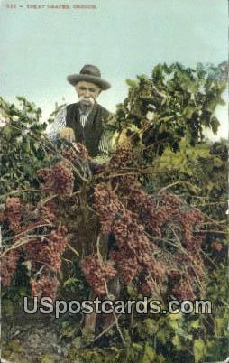 Tokay Grapes - Misc, Oregon OR Postcard