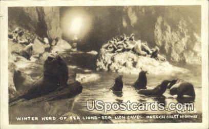 Real Photo - Winter Herd, Sea Lions - Oregon Coast Highway Postcards, Oregon OR Postcard