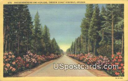 Rhododendrons - Oregon Coast Highway Postcards, Oregon OR Postcard